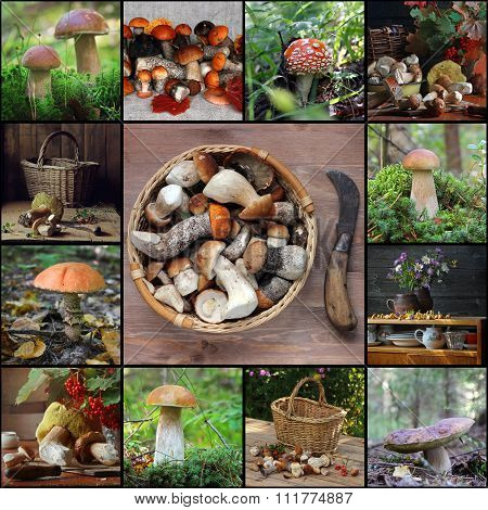 Collage From Pictures With Mushrooms.