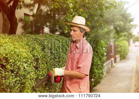 Gardener cutting a hedge with a hedge cutter