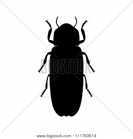 Firefly beetle Lampyridae. Sketch of Firefly beetle. Firefly beetle isolated on white background.