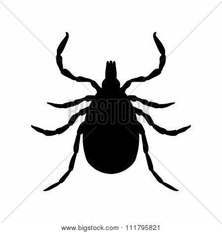 Tick parasite. Sketch of Tick. Mite. Tick isolated on white background. Tick Design for coloring boo