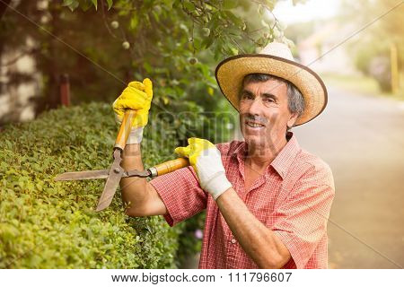 Gardener cutting a hedge with a garden pruner