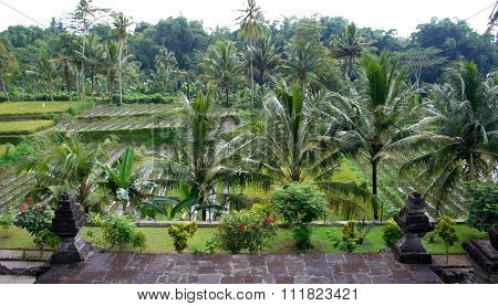 Tropical forest segment, East Java, Indonesia
