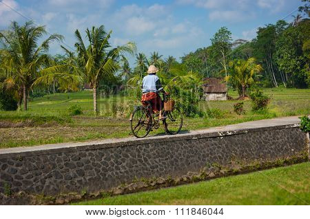 Old Balinese Woman Cycling Past Rice Fields On Her Bike