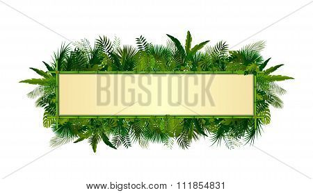 Tropical plants background. rectangle floral frame with space for text in concept bamboo