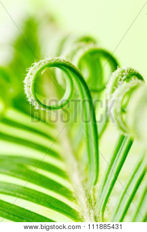tendril of plant