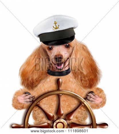 Dog sailor.