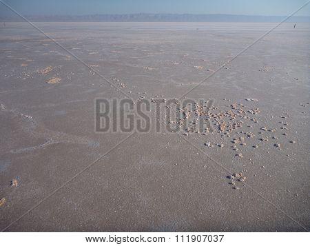 Salt Grain At A Dried Salt Lake