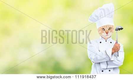Ginger cat chef over green abstract background.