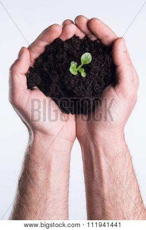 Hands Holds Topsoil With Plant