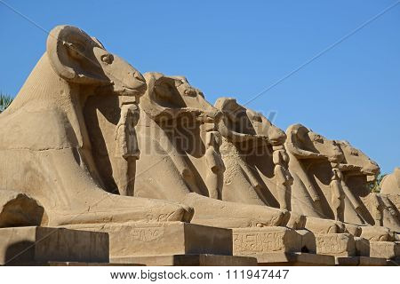 Avenue Of Sphinxes - Luxor