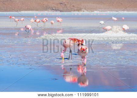 Pink Flamingos At