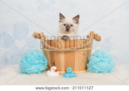 Cute rag doll kitten cat in a wooden basket with blue bathroom details
