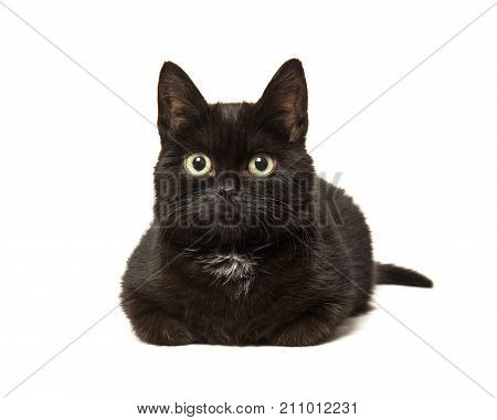 Black cat lying down on the floor seen from the front isolated on a white background