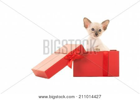 Siamese baby cat sitting in a red present box isolated on a white background