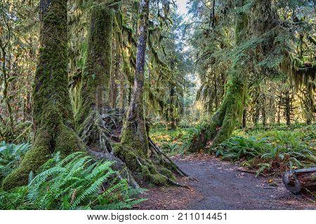 Hoh Rainforest at Olympic national Park, Washington, USA
