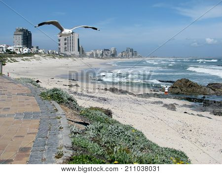 SEASCAPE, WITH A BIRD IN FLIGHT IN THE FORE GROUND, AND ROUGH WAVES, AND HIGH RISE BUILDINGS IN THE BACK