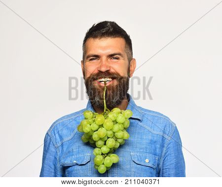 Winegrower With Smiling Face Holds Cluster Of Grapes In Teeth.