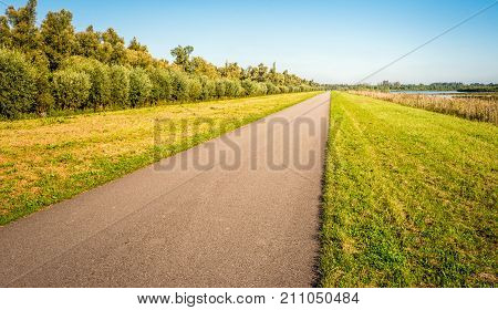 Seemingly endless asphalt country road in a Dutch polder on a sunny day in the beginning of the fall season. On the left side of the road are trees and on the right side reed plants and water.