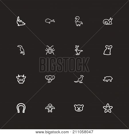 Set Of 16 Editable Zoology Outline Icons. Includes Symbols Such As Smelly Animal, Proboscis, Kangaroo And More
