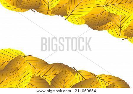 Autumn - beech leaves - vector background , Autumnal leaf of beech (Fagus sylvatica)