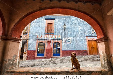 March 1 2016 Bernal Queretaro Mexico: dog sitting under arch in idyllic Spanish architecture in the historic town center