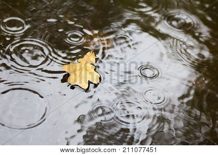 Autumn rain. Yellow fallen autumn leaf in a puddle.