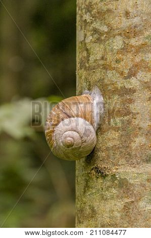 encapsulated land snail on tree trunk in natural ambiance