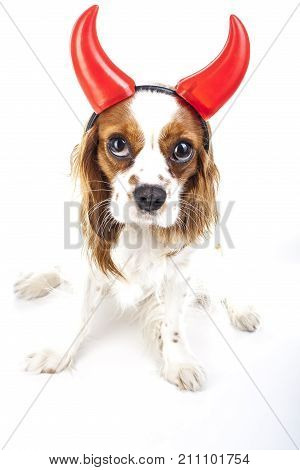 Devil dog illustration. King charles spaniel with devil hat. Evil dog. Carnival evil costume. New Year's Eve. Devil sign symbol party masquerade. Sylvester cute spaniel dog wear devil horn..