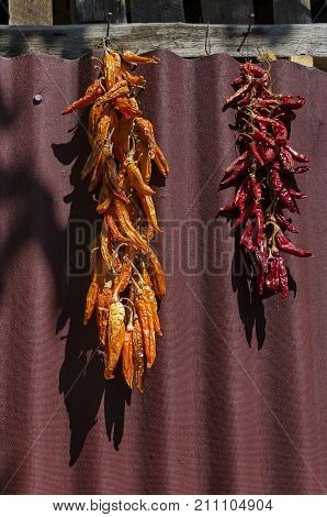 Beautiful enticing string dry ripe råd and yellow chilli pepper suspended on the wall, Zavet town, Bulgaria