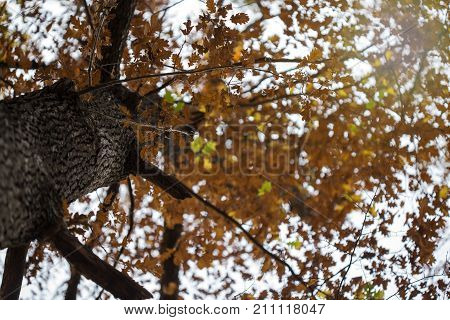 Autumn landscape with leaves from a tree