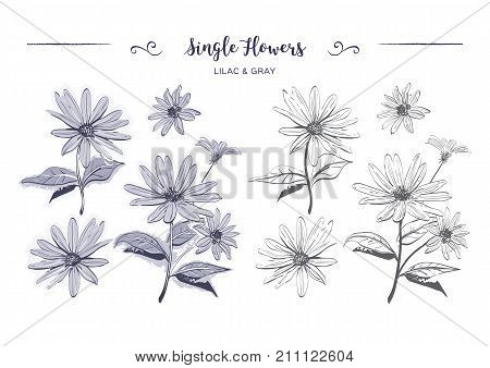 Hand drawn flowers sketch Chamomiles, daisies. Coloring page, Jerusalem artichoke flower. Botanical drawings watercolor stylization, Vector illustration