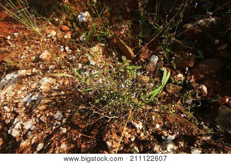 moss and small green ferns growing on the natural ground in rain forest