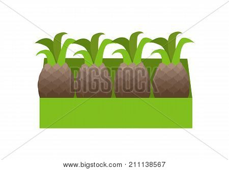 Pineapples in a green box. Box full of fresh pineapples in flat. Box of lovely pineapples. Pineapples in a row. Retail store element. Isolated vector illustration on white background.