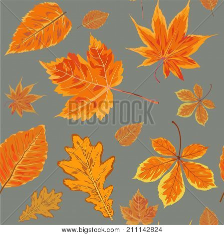 Vector Seamless Autumn fall season patten background floral watercolor style with colorful falling orange yellow leaves of forest maple oak tree. Decorative beautiful painted print on light gray