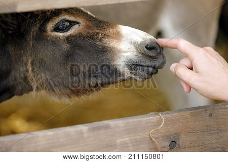 the finger of a hand on the donkey's nose