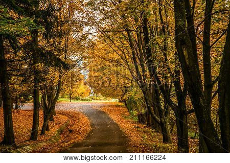Autum forest background with a colorful of autumn leaves.