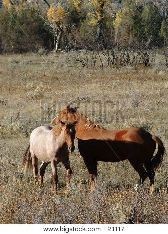 Mustang Pair