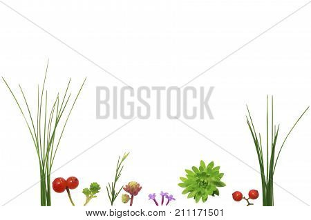 Naturally decorated postcard. Small batches of grass sprouts flowers and berries isolated on white background imitate vegetation of a swamp or a meadow. Free space in the middle to put text in.