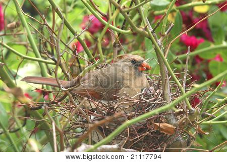 Wild Newborn Baby Bird in a Nest.
