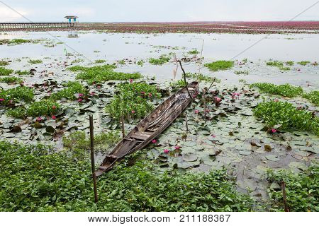beautiful water lily or lotus flower at Talay-Noi Phatthalung province Thailand