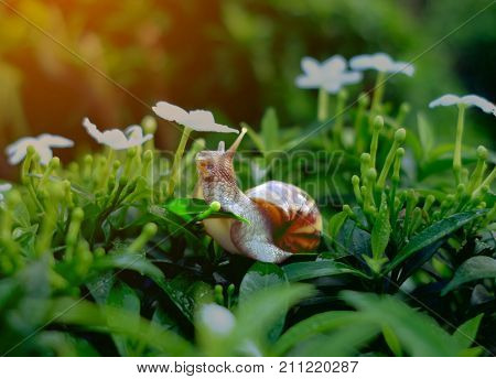 Snail On Fresh Leaf In The Morning. Burgundy Snail (helix, Escargot) With Leaf In A Natural Environm