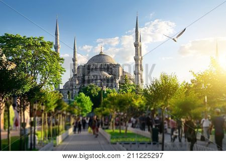 Seagulls over Blue Mosque and Bosphorus in Istanbul, Turkey