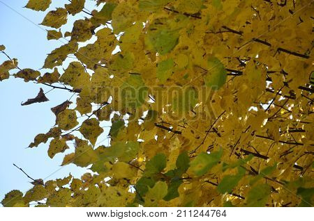 colorful autumn leaves on a background of blu sky