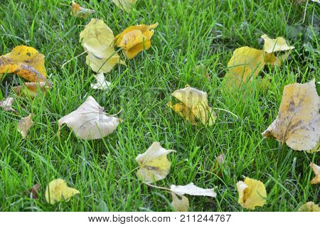 colorful autumn leaves on a background of green grass