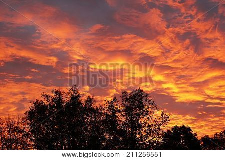 dramatic flaming sky with orange clouds and silhouetted trees at sunrise