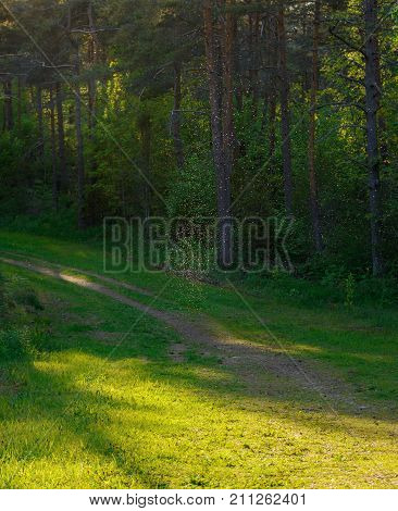 Magic autumn background with dancing fairies midges in colorful forest.