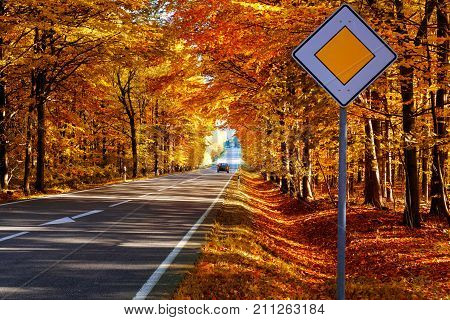 Road in the autumnal forest with main street sign.