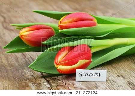 Gracias (which means thank you in Spanish) with three red and yellow tulips on wooden surface