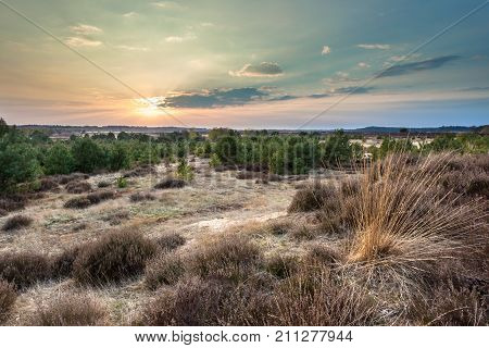 Sunset Over Heather And Sand In The Veluwe Area