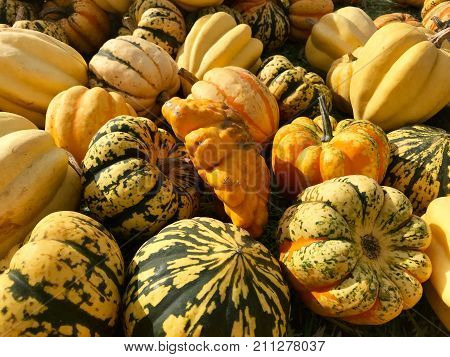 Heap of autumn carving pumpkins for sale at local farmers market